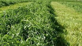 grassland image2