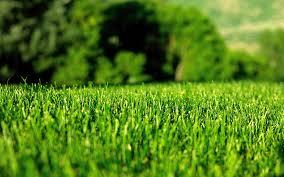 lawn image1