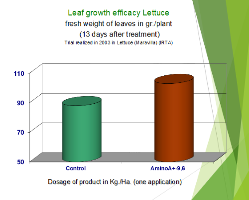 Lettuce Leaf Growth Efficacy After 13 Days Treatment