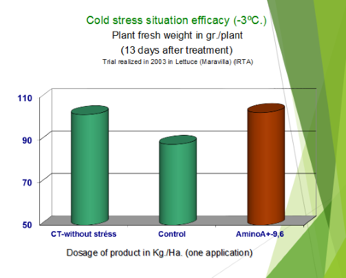 Lettuce Cold Stress Situation Efficacy 13 Days After Treatment