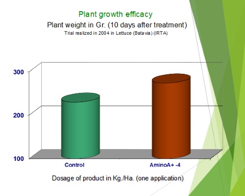 Lettuce Plant Growth Efficacy 10 Days After Treatment