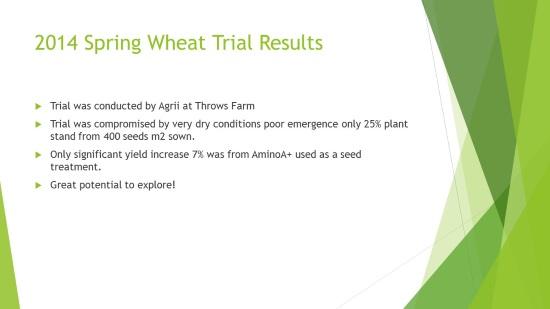 Spring-Wheat1