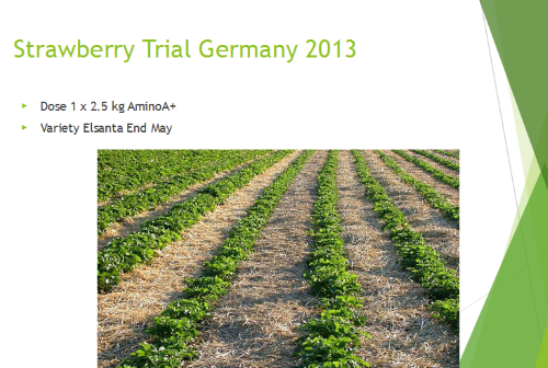 Strawberry Trial Germany 2013