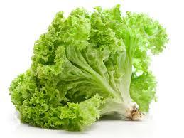 lettuce image2